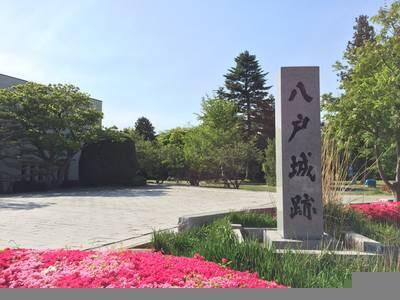 hachinohejyoshi.jpg